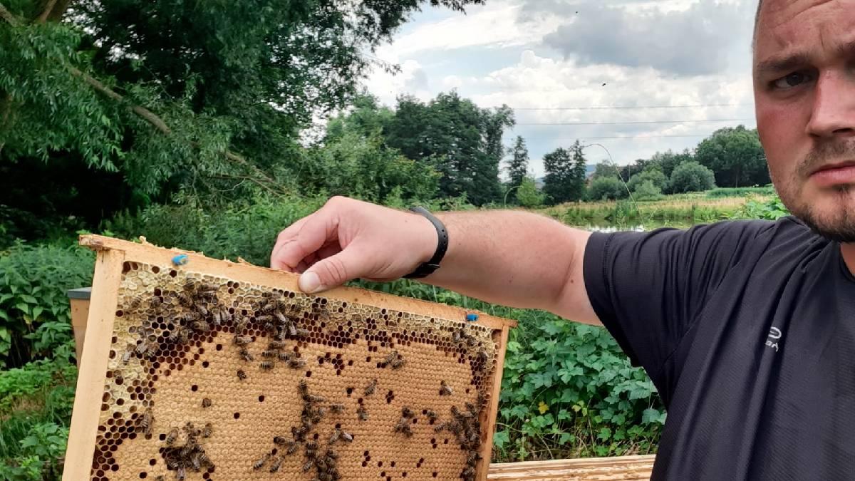 """Česko má včelstev dostatek, ale množství medu klesá. Jaká byla krajská """"nadílka""""? Odpovídal Jan Skalský"""