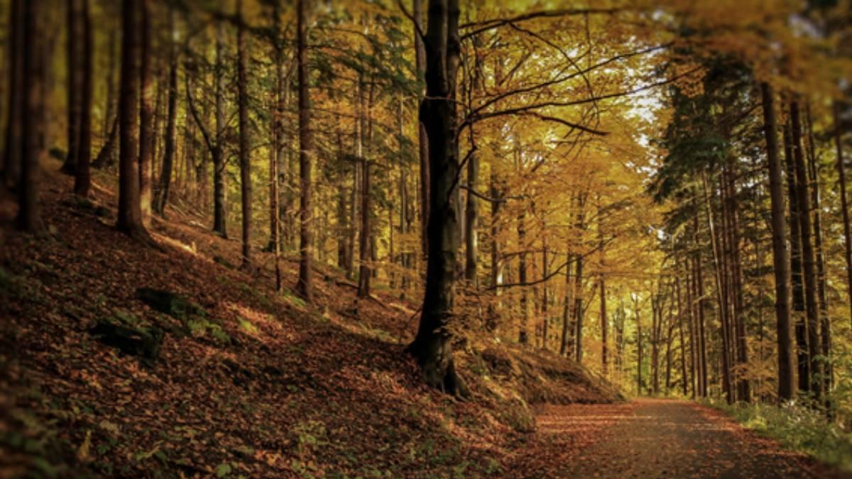 Kam směřuje vývoj lesů na severu Čech? Máte možnost zeptat se přímo lesníků!